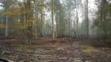La forêt de Fourmies, route d'Anor, le 22 octobre 2016.