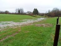 Si l'usine de pellets industriels se construit, ces terres agricoles vont disparaitre.