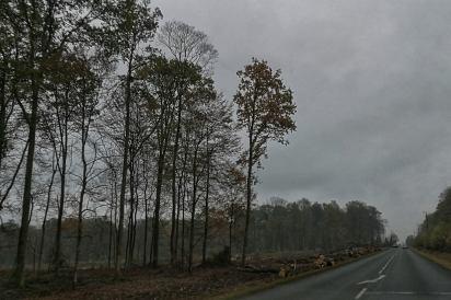 La forêt domaniale de Fourmies, route d'Anor.